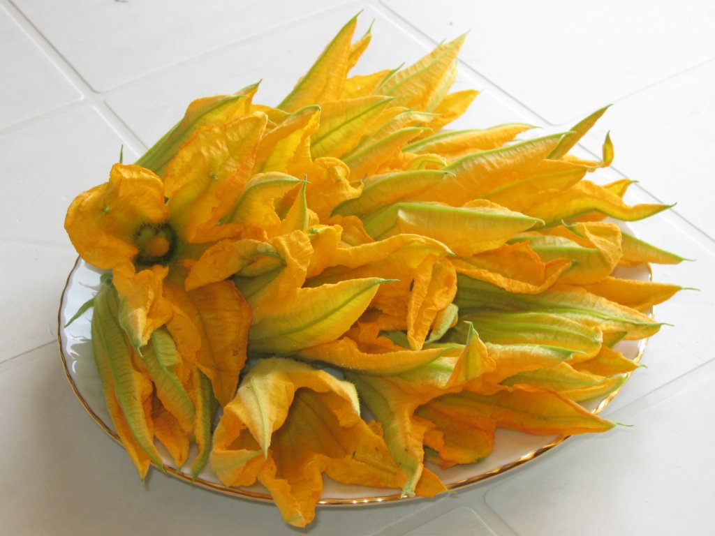 kabak-çiçeği